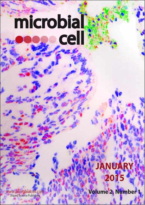Cover MIC January 2015