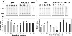 Figure 4 AtBI-1 inhibits cell death induced by PAP in yeast