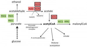 Figure 2 Alkaline response in yeast