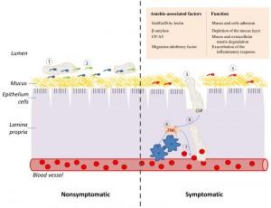 Figure 1 TNF sensing in Entamoeba