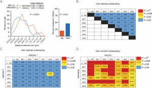 Figure 2 Interchromosomal clustering during transcriptional memory.