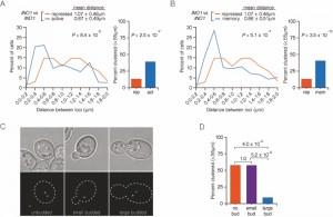 Figure 6 Interchromosomal clustering during transcriptional memory.