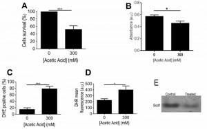 Figure 4 Proteomics of Z. bailii acetic acid - induced PCD