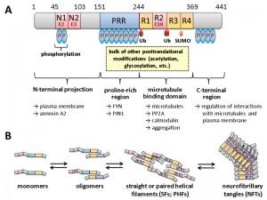 Figure 1 Humanized yeast for studies of tau