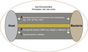 Figure 1 microRNAs shape microbiota
