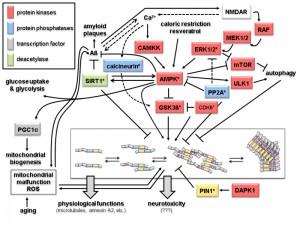 Figure 2 Humanized yeast for studies of tau
