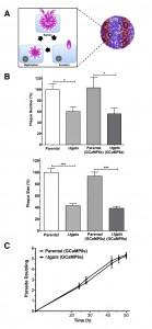 Figure 2 PtdThr-regulated calcium homeostasis in Toxoplasma gondii