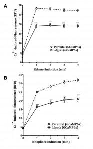 Figure 5 PtdThr-regulated calcium homeostasis in Toxoplasma gondii