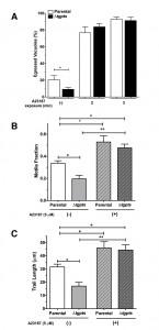 Figure 6 PtdThr-regulated calcium homeostasis in Toxoplasma gondii