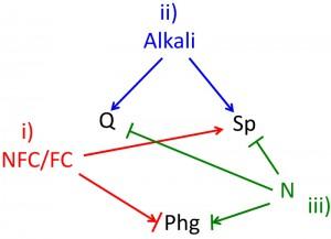 Figure 3 Fate choice in yeast