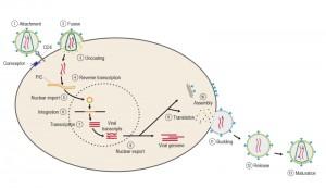 Figure 4 HIV AIDS pandemic
