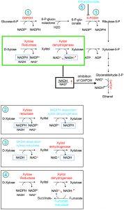 figure-2-glycolytic-side-product-elimination