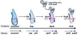 figure-1-the-moonlighting-nprr-regulator