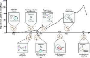 figure-1-milestones-of-autophagy-research-in-yeast