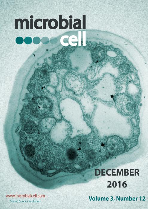 Cover MIC December 2016