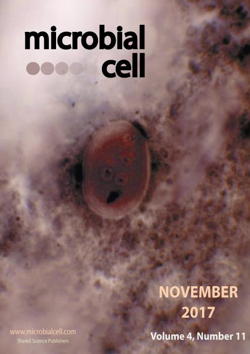 Cover MIC November 2017