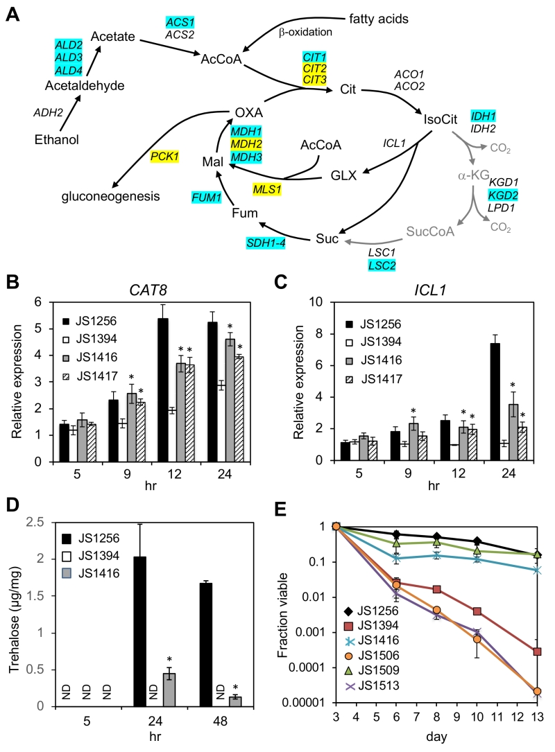 spontaneous mutations in cyc8 and mig1 suppress the short