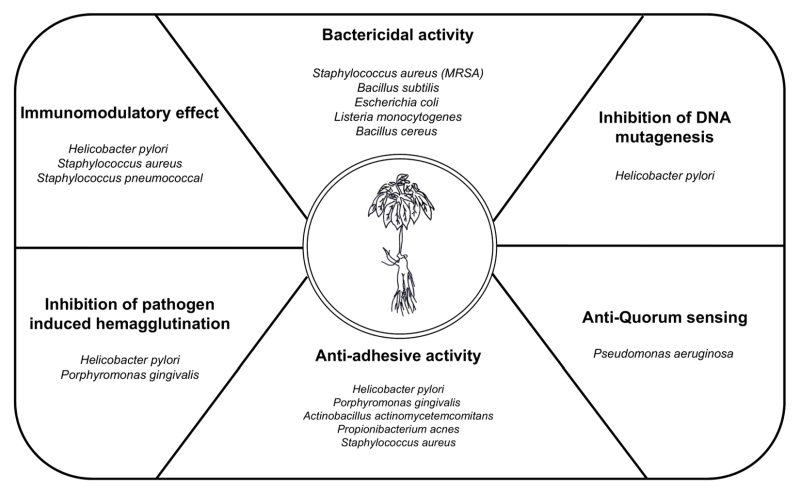 Protective roles of ginseng against bacterial infection