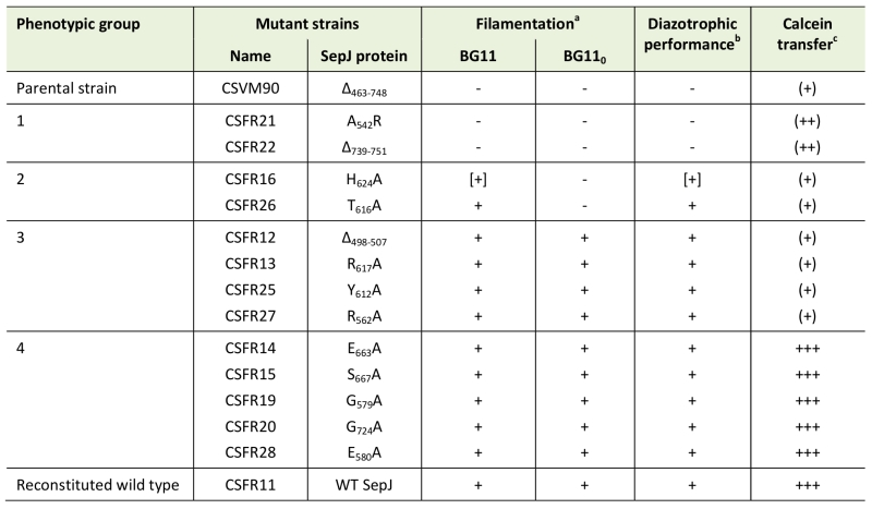 Specific mutations in the permease domain of septal protein