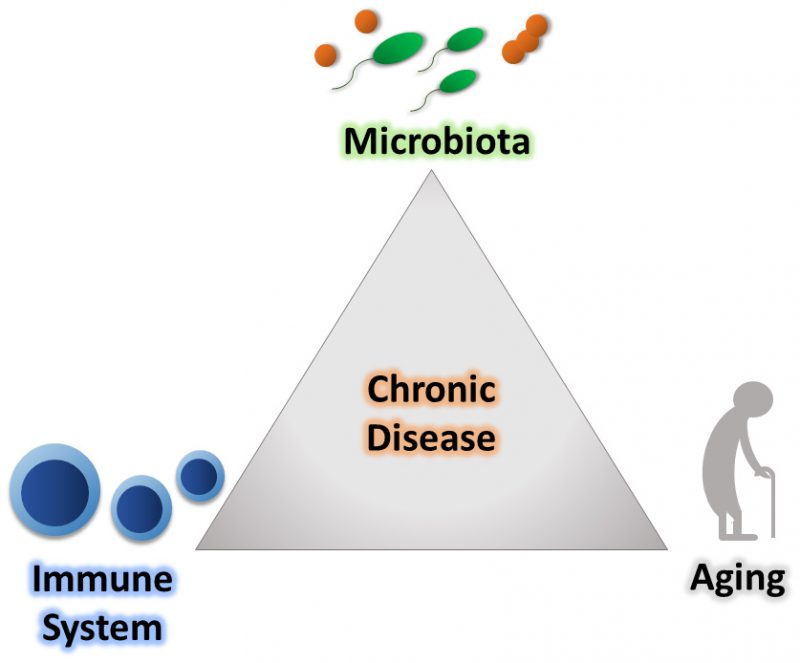 The influence of the microbiota on immune development