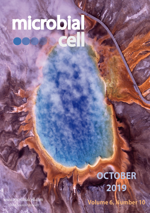 Cover MIC October 2019