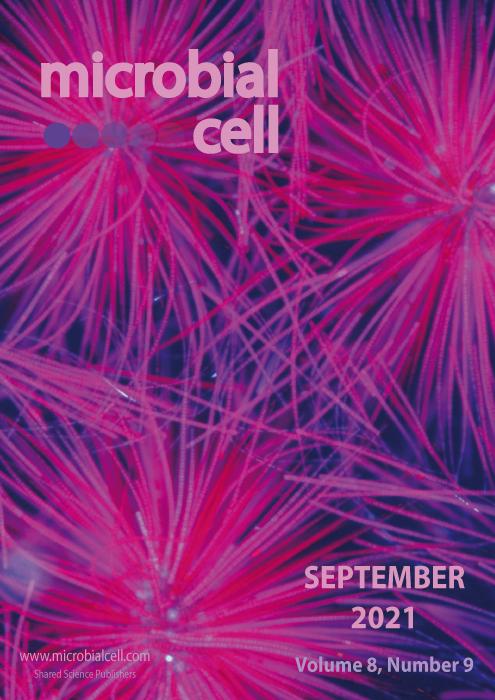 Cover MIC September 2021
