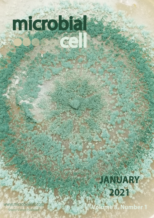 Cover MIC January 2021